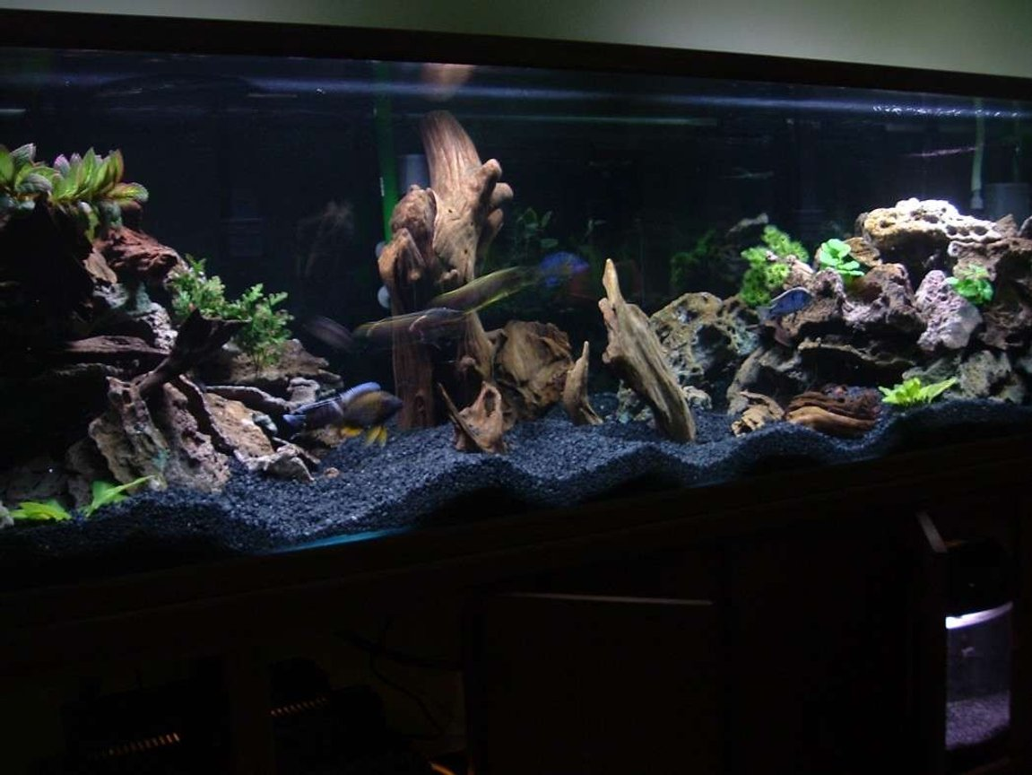 210 gallons freshwater fish tank (mostly fish and non-living decorations) - 210g Oceanic