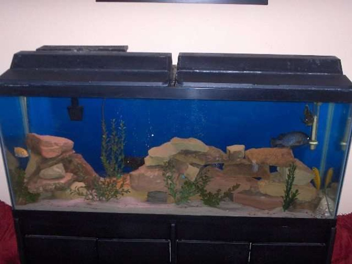 55 gallons freshwater fish tank (mostly fish and non-living decorations) - 55G