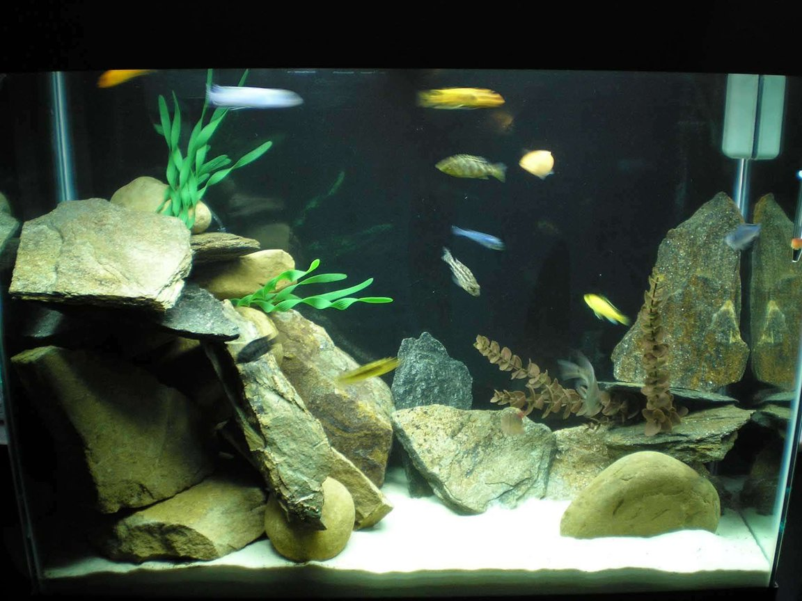 37 gallons freshwater fish tank (mostly fish and non-living decorations) - 37 Gal. Eclipse w/ cichlids and rocks!