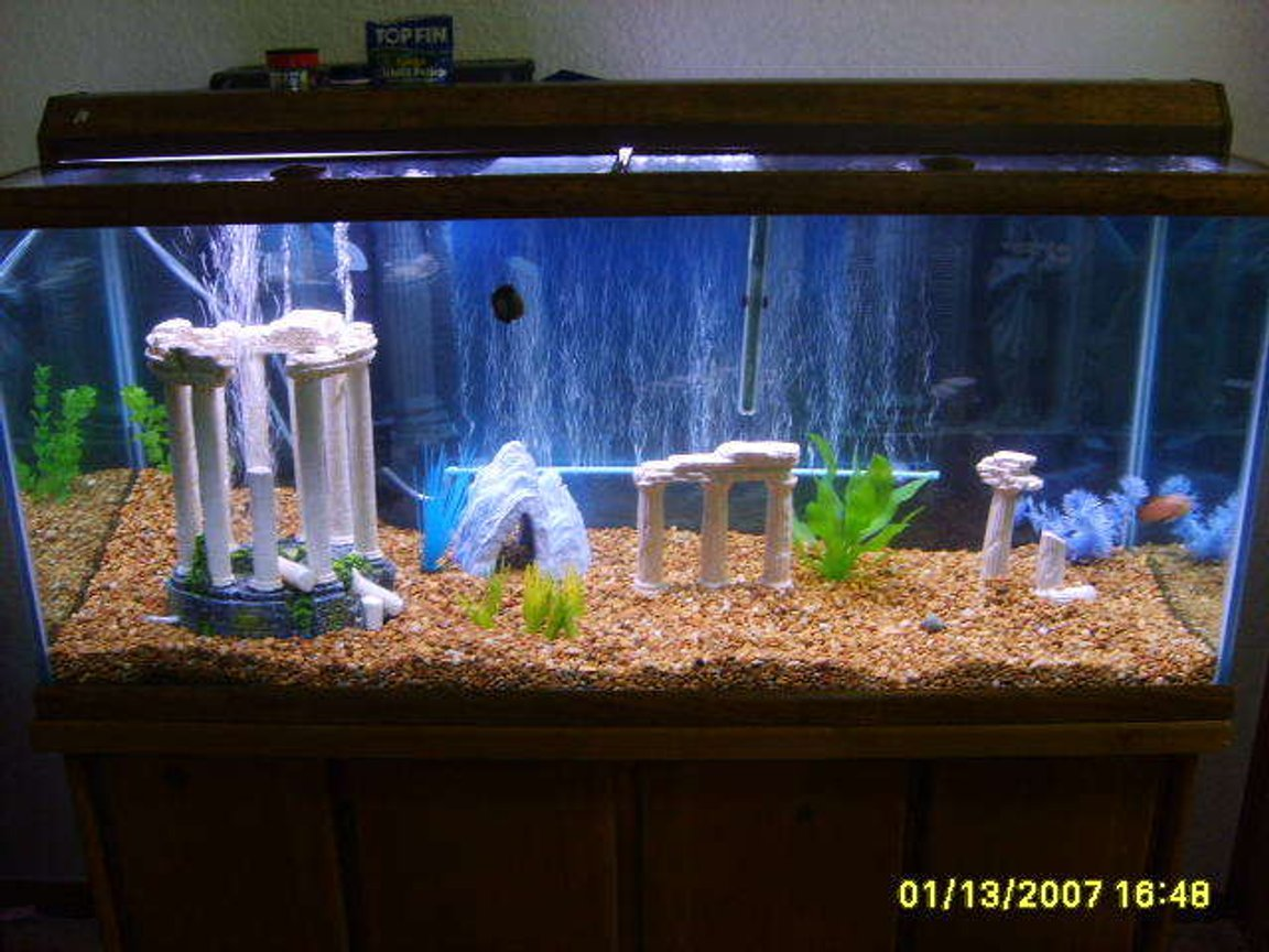 75 gallons freshwater fish tank (mostly fish and non-living decorations) - this is my 75 gallon tank done in a roman theme with the 3D background to match, soon will be adding a bubble light and a lighted driftwood! I will upload some more pictures when I get them added!