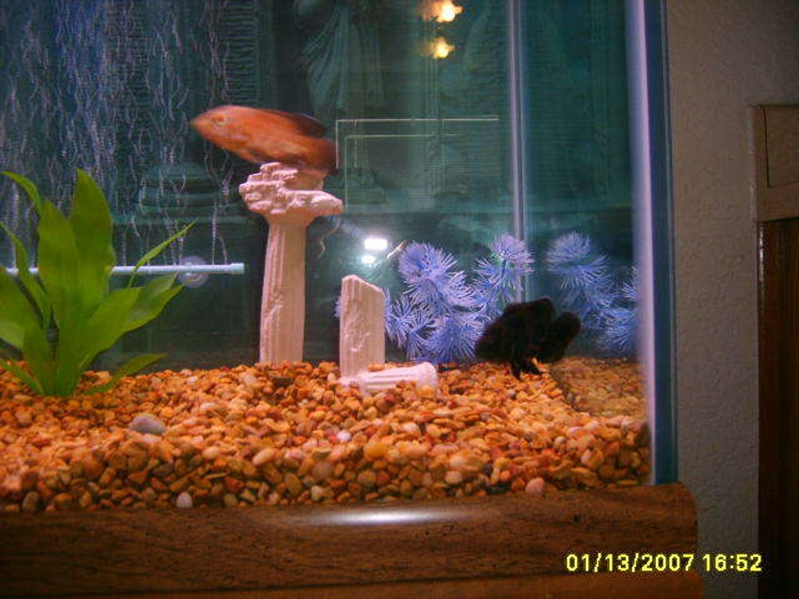 75 gallons freshwater fish tank (mostly fish and non-living decorations) - this is toots and scooby playing chase