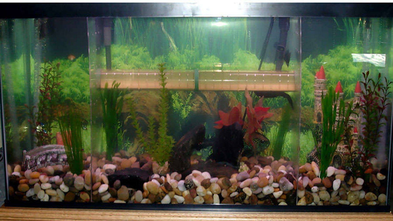 55 gallons freshwater fish tank (mostly fish and non-living decorations) - Full view of the tank