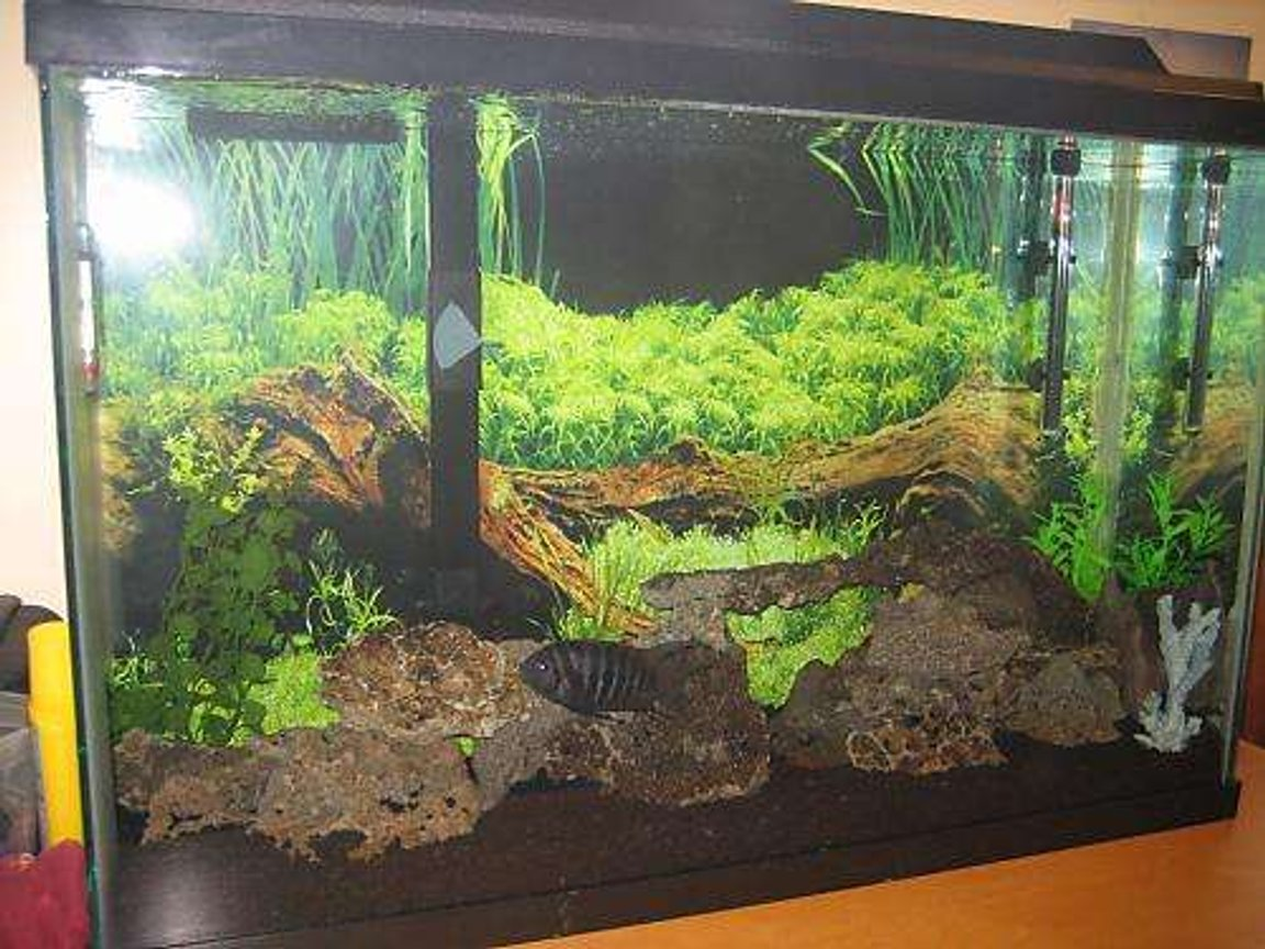 45 gallons freshwater fish tank (mostly fish and non-living decorations) - Tony's tank