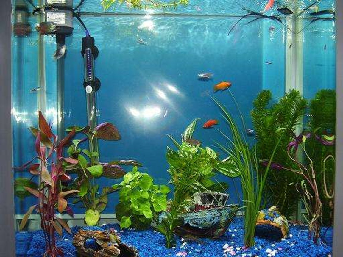 26 gallons freshwater fish tank (mostly fish and non-living decorations) - :)