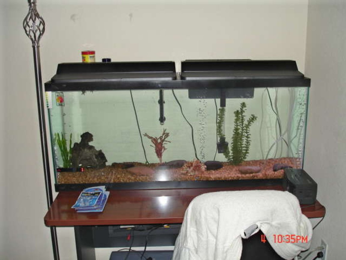 55 gallons freshwater fish tank (mostly fish and non-living decorations) - Brand New