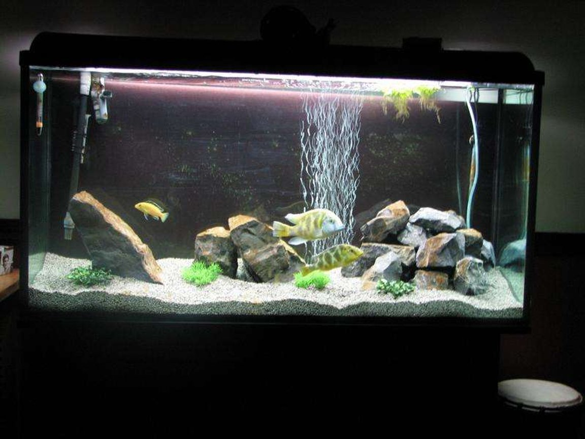 50 gallons freshwater fish tank (mostly fish and non-living decorations) - 77g with fake plastic plant