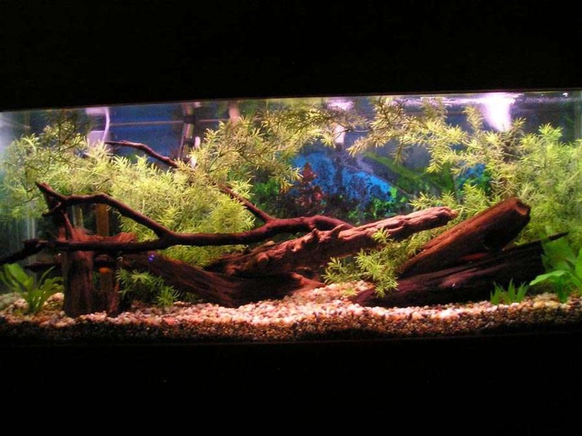 "55 gallons freshwater fish tank (mostly fish and non-living decorations) - this is a 55 gal tank ""artificial plants"""