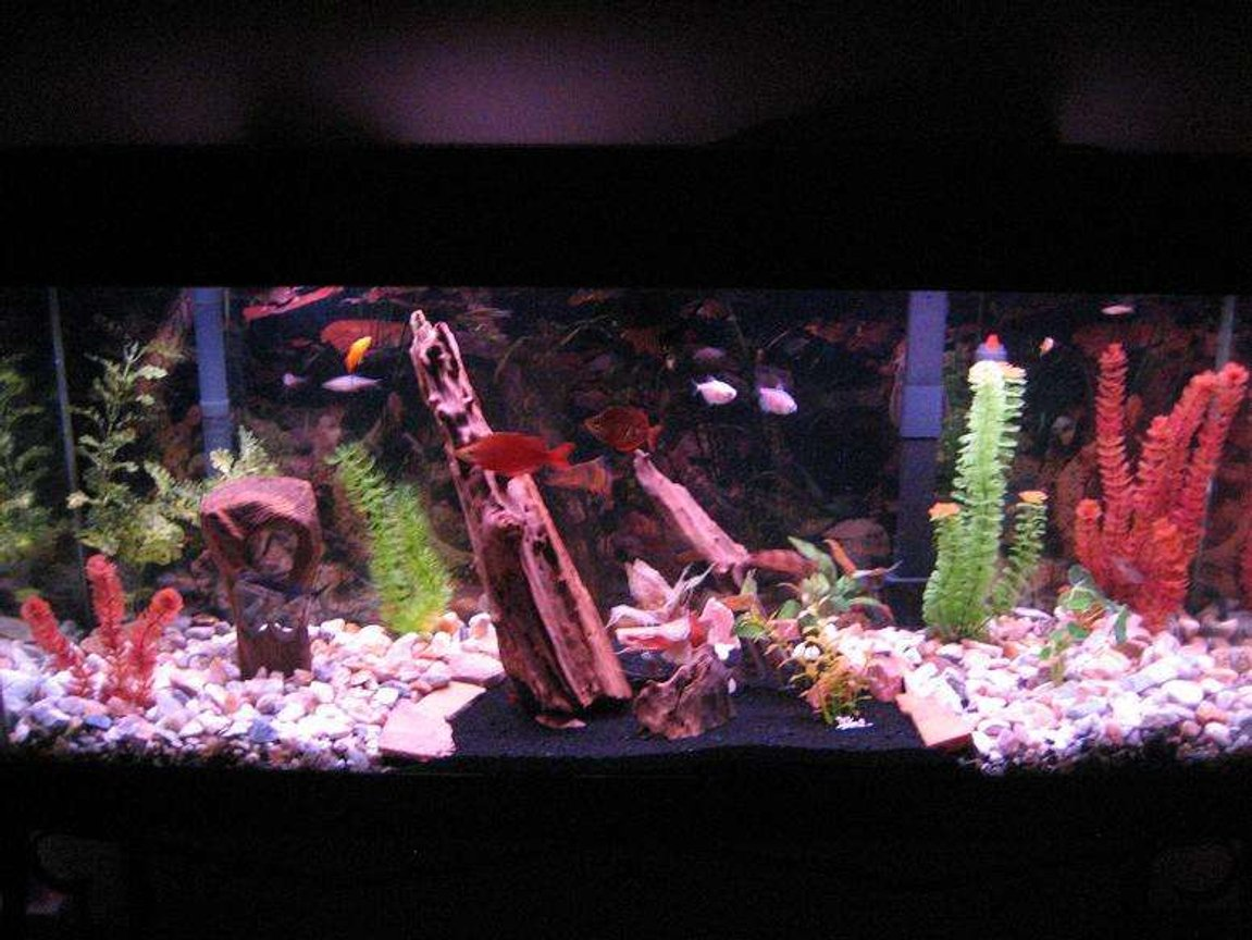 55 gallons freshwater fish tank (mostly fish and non-living decorations) - 55