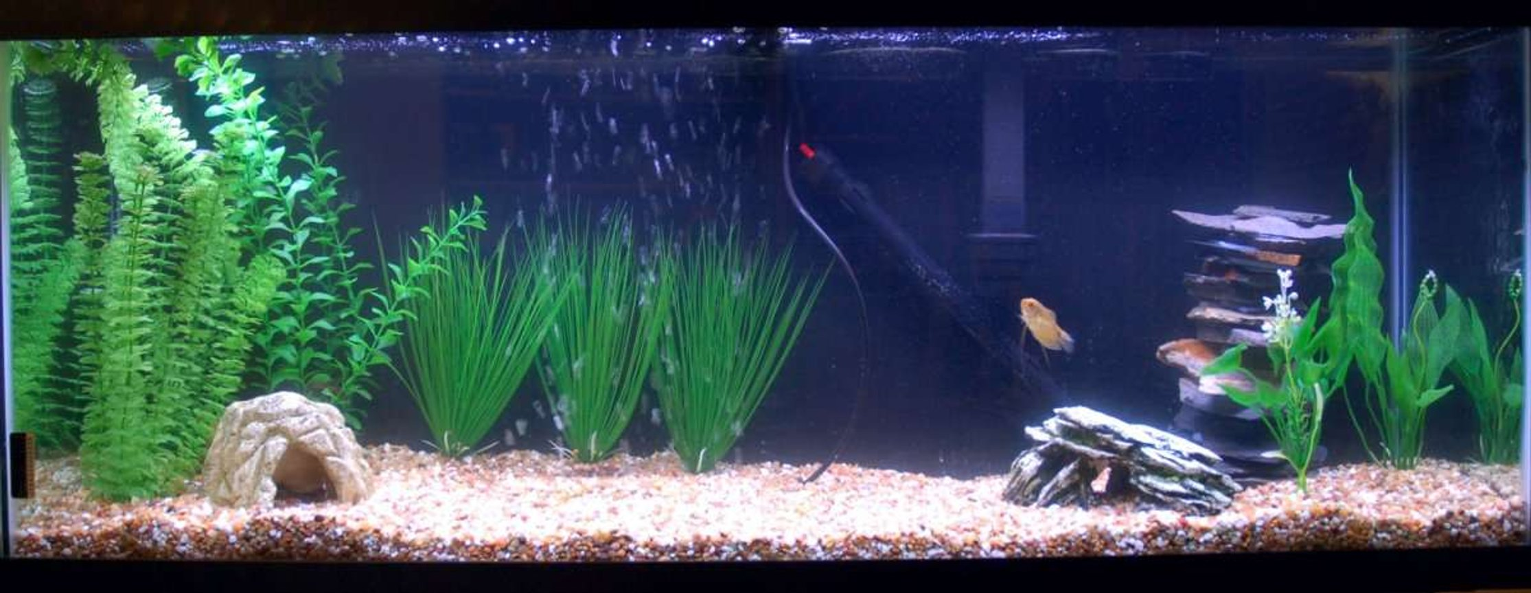 55 gallons freshwater fish tank (mostly fish and non-living decorations) - Here is my tank