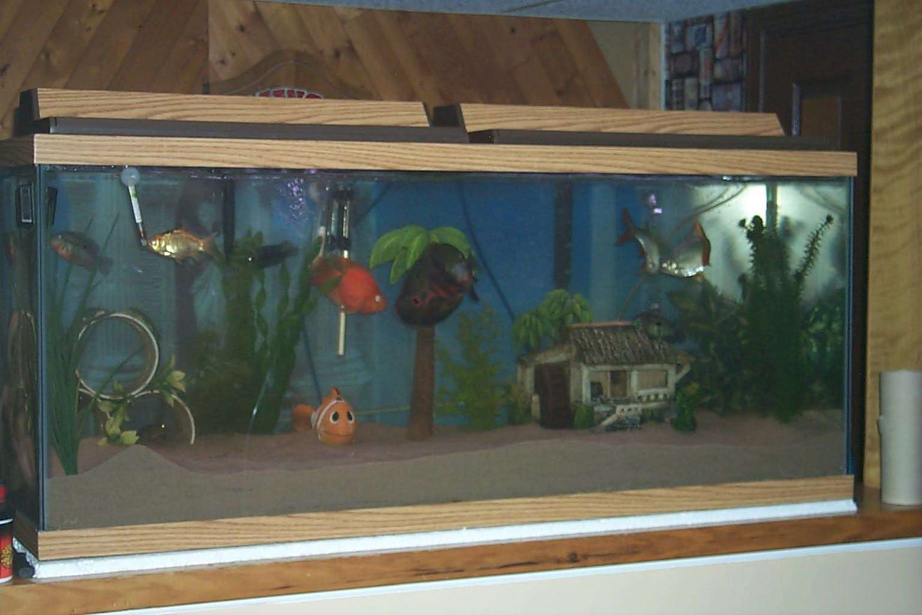 75 gallons freshwater fish tank (mostly fish and non-living decorations) - Mr. Simmons and his buds