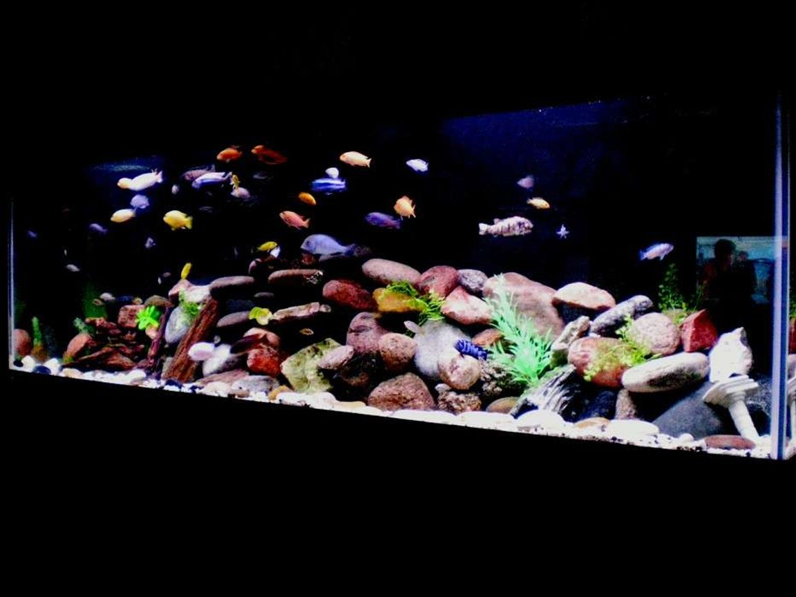 125 gallons freshwater fish tank (mostly fish and non-living decorations) - All African Cichlids most from Lake Malawi Decorations Include: Various Rocks Real and Fake Wood Plastic Plants