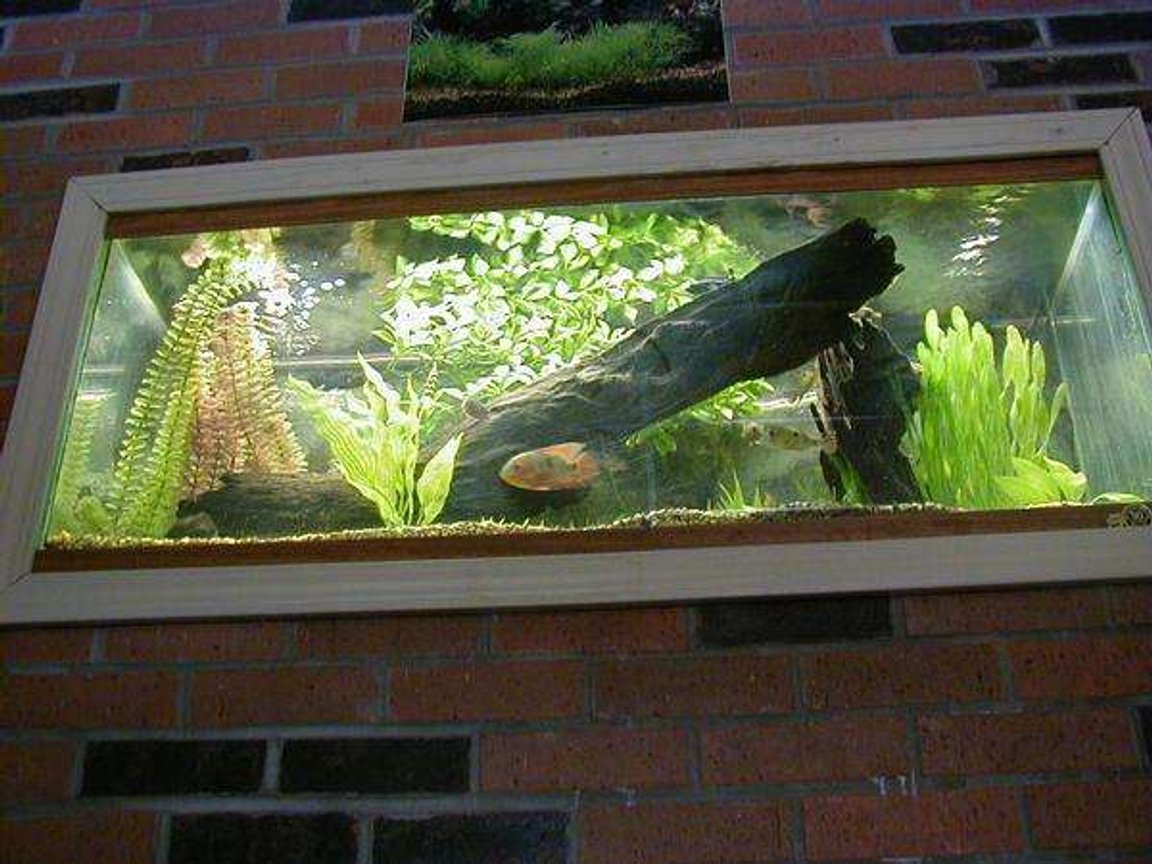 29 gallons freshwater fish tank (mostly fish and non-living decorations) - WELL THIS IS MY NEW TANK BEFORE I HAD A 10 GALLON SRRY I COULDENT GET THE FISH THEY ARE MOSTLY HIDING AND ARE SLEEPING I PUT ALOT OF HARD WORK INTO THIS TO PUT IT UP ON THE WALL AND MY PARENTS DIDENT HELP ME I DID IT ALL ON MY OWN hehe srry i like to be proud of my aclomplishments man i cant spell HOPE YOU LIKE IT