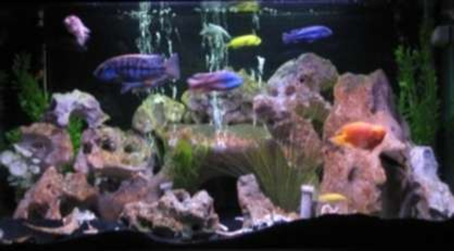 75 gallons freshwater fish tank (mostly fish and non-living decorations) - 75 gallon