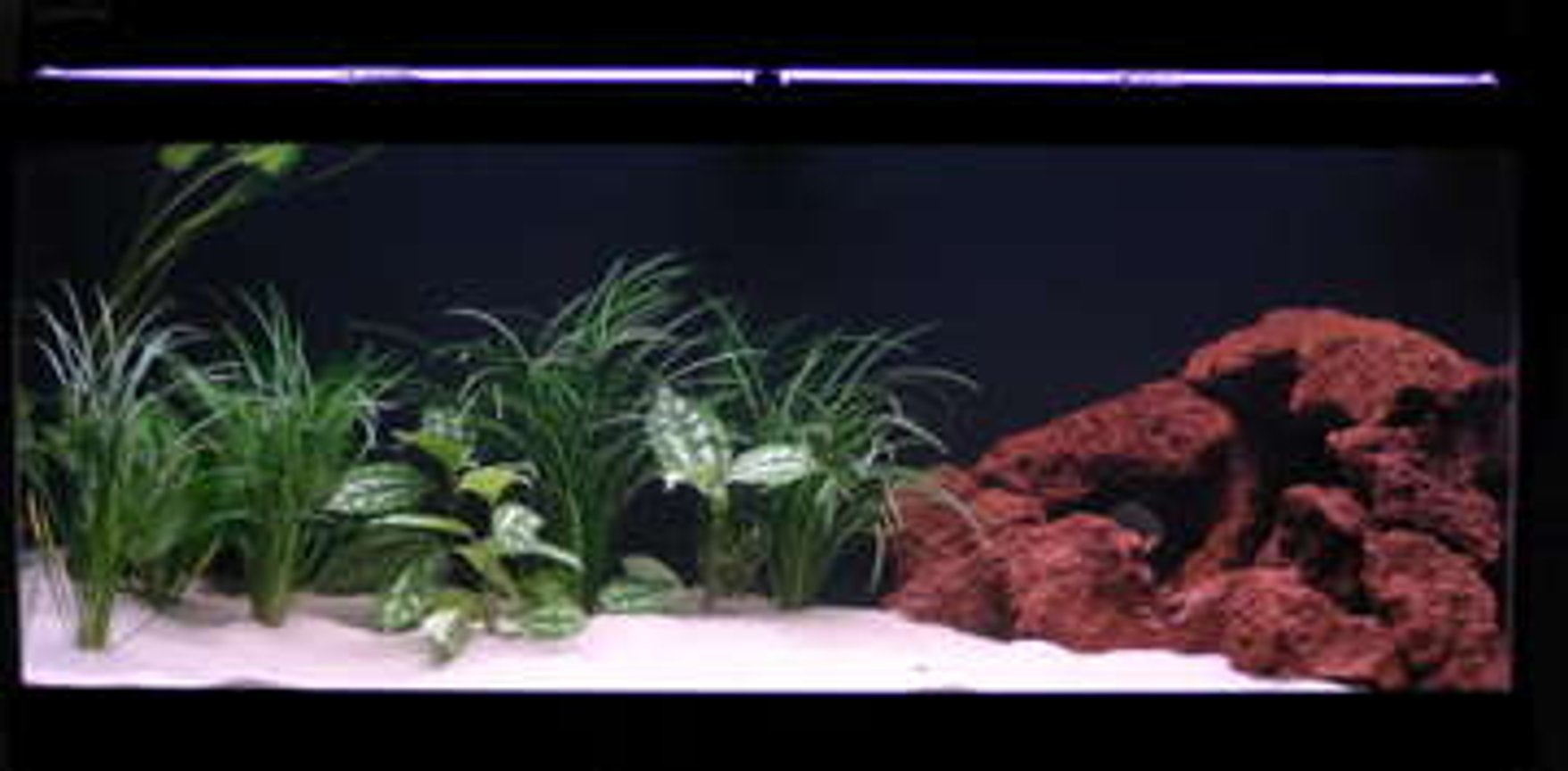 75 gallons freshwater fish tank (mostly fish and non-living decorations) - my 75g piranha tank