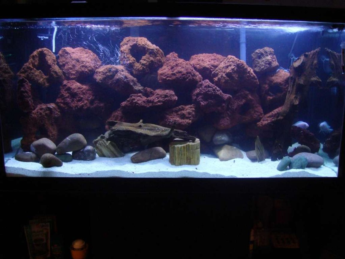 90 gallons freshwater fish tank (mostly fish and non-living decorations) - 90 gallon Malawi cichlid set up
