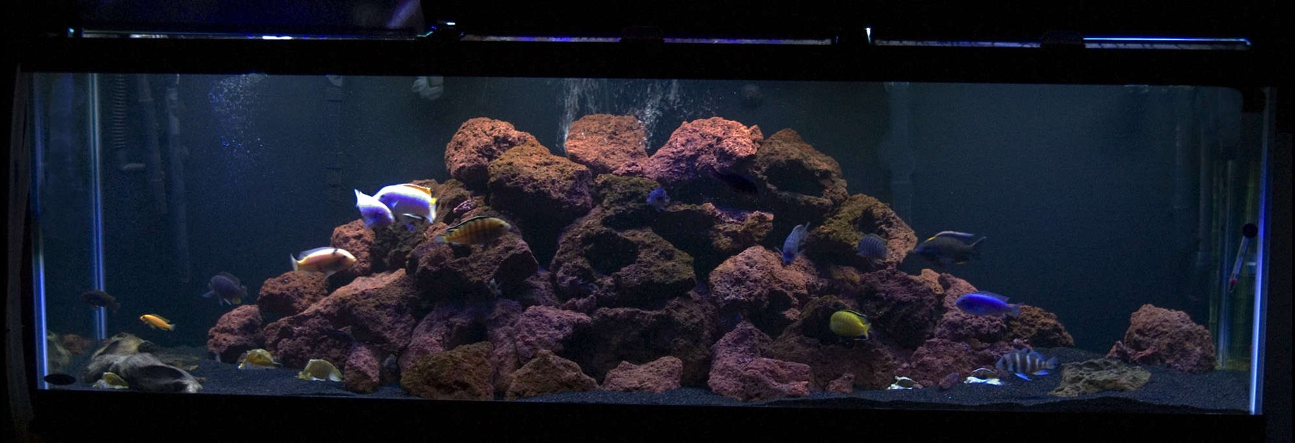 125 gallons freshwater fish tank (mostly fish and non-living decorations) - My tank ala Tahitian moon black sand