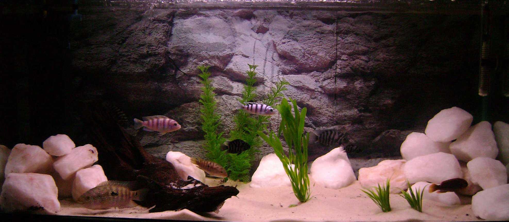 30 gallons freshwater fish tank (mostly fish and non-living decorations) - Fake Plants, Silica Sand, Quartz Rock, Malaysian Driftwood, Variety of Fish
