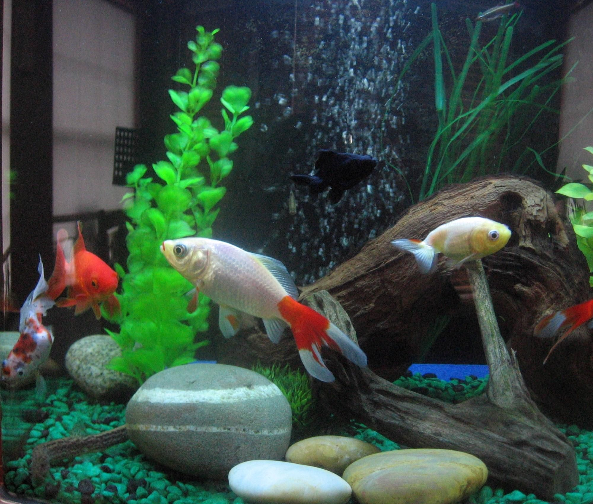 Tiernans2fishes avatar