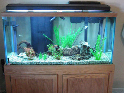 90 gallons freshwater fish tank (mostly fish and non-living decorations) - Front View of my 90 gallon barb tank.