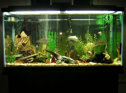 90 gallons freshwater fish tank (mostly fish and non-living decorations) - 90 gallon fresh water tank.