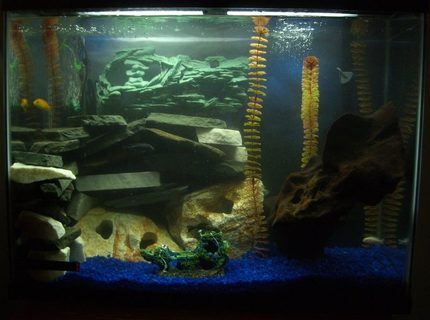 45 gallons freshwater fish tank (mostly fish and non-living decorations) - 45g mbuna tank