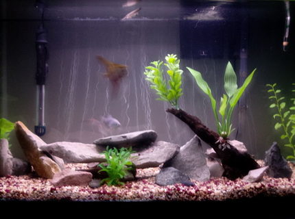 45 gallons freshwater fish tank (mostly fish and non-living decorations) - 45 Gallon Tank - Flat River Rock/ Slabs - Artificial Plants - Asiatic Knifefish, African Rope Fish, Needle Nose Gar, Blue Gourami, Angelfish, Catfish, Kribensis Cichlids