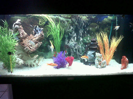 50 gallons freshwater fish tank (mostly fish and non-living decorations) - Juwel Rio