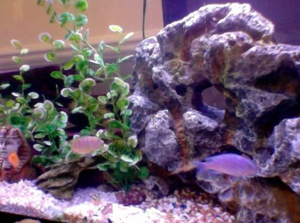 50 gallons freshwater fish tank (mostly fish and non-living decorations) - busy tank