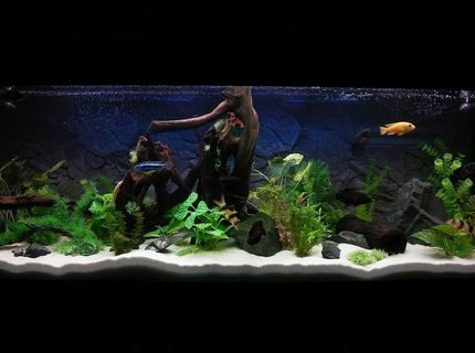 Rated #3: 180 Gallons Freshwater Fish Tank - 6x2x2, 180 gal