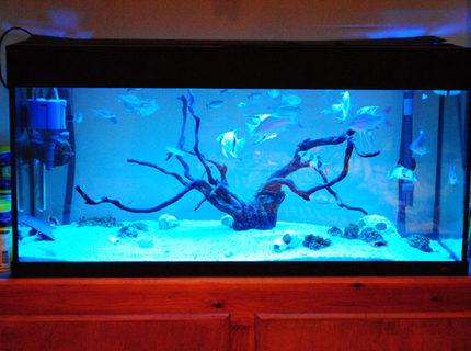 Rated #18: 44 Gallons Freshwater Fish Tank - MY TANK, BEEN RUNNINF FOR OVER 12 MONTHS NOW.