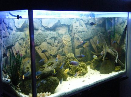 Rated #14: 150 Gallons Freshwater Fish Tank - My 150Gal(600L) African Cichlid aquarium.