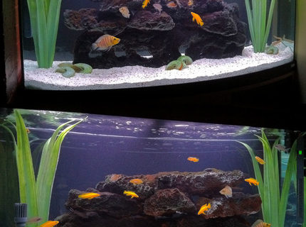 Rated #19: 70 Gallons Freshwater Fish Tank - Double-sided 70G Tanganyika Show Tank with bow-front.