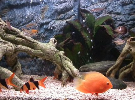 Rated #16: 30 Gallons Freshwater Fish Tank - My tank with the new background
