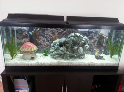 50 gallons freshwater fish tank (mostly fish and non-living decorations) - My new decorations