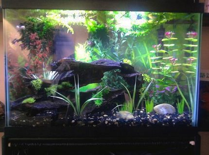 20 gallons freshwater fish tank (mostly fish and non-living decorations) - Updated photo with different lighting, couple new plants {fake} on the ground, and some floaters on top {live}. Also water level raised.