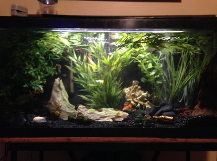 Rated #8: 30 Gallons Freshwater Fish Tank - my tanks redone!! nothing special but its a change