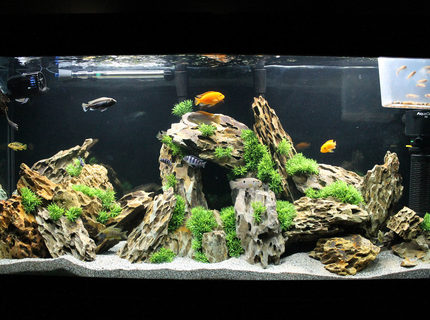 Rated #1: 60 Gallons Freshwater Fish Tank - 60g Marineland Heartland Setup