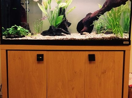 50 gallons freshwater fish tank (mostly fish and non-living decorations) - Fluval Roma 200