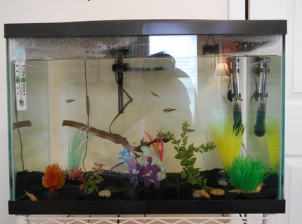 20 gallons freshwater fish tank (mostly fish and non-living decorations) - This is the new, updated version of my fish tank! I will be adding zebra danios soon.