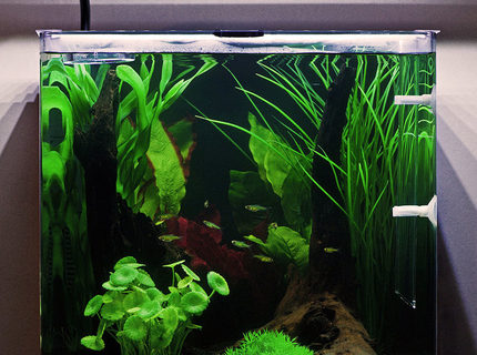 Rated #3: 10 Gallons Freshwater Fish Tank - My Aqua One Aspire55 with Green Neon Rasbora.