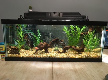 20 gallons freshwater fish tank (mostly fish and non-living decorations) - Front Side of New Tank