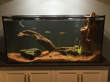 150 gallons freshwater fish tank (mostly fish and non-living decorations) - My tank