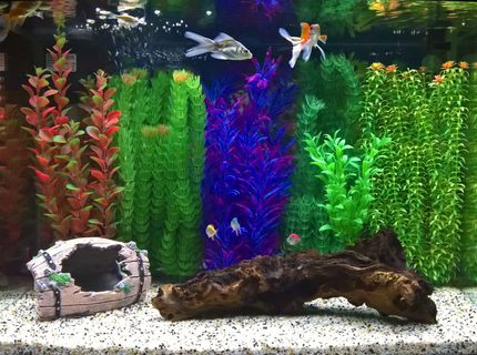 12 gallons freshwater fish tank (mostly fish and non-living decorations) - Panoramic tank