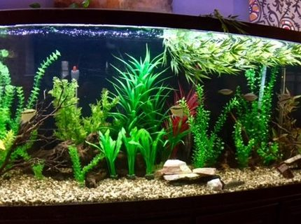 150 gallons freshwater fish tank (mostly fish and non-living decorations) - my 150 Gallon. Tons of barbs, rainbow fish and cory's.