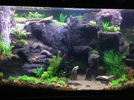 Rated #7: 75 Gallons Freshwater Fish Tank - West Africian Biotope(ish) I'm not super strict.