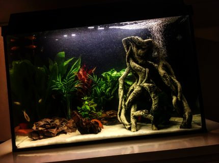 200 gallons freshwater fish tank (mostly fish and non-living decorations) - Freshwater planted community fish Aquarium