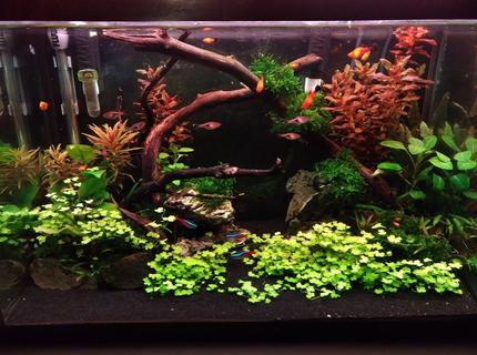 Rated #4: 20 Gallons Freshwater Fish Tank - 6 weeks into new built