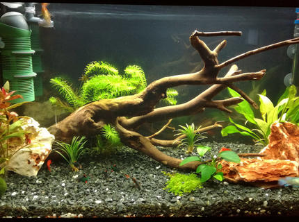 34 gallons freshwater fish tank (mostly fish and non-living decorations) - my 34 gallon (130 liters) freshwater fish tank.
