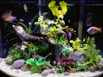 Rated #1: 36 Gallons Freshwater Fish Tank - 36 gallon freshwater aquarium with rock driftwood and artificial plants
