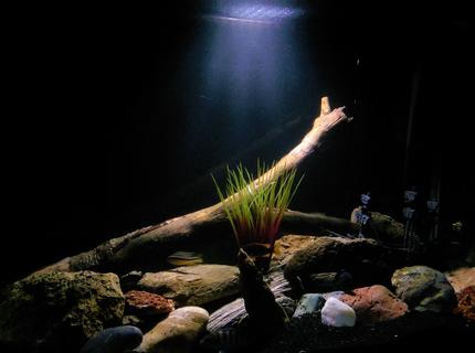 50 gallons freshwater fish tank (mostly fish and non-living decorations) - Fresh water tank, only cichlids :)